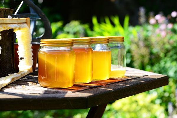 Miel abeille bébé alimentation